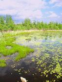 Volo Bog State Natural Area — Stock Photo