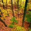 Beautiful Autumn Illinois Landscape — Stock Photo