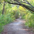 Everglades National Park Trail — Stock Photo