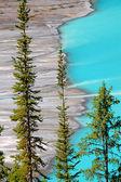 Peyto Lake of Canada — Stock Photo