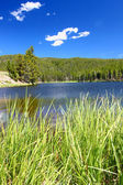 Sibley Lake Bighorn National Forest — Stock Photo