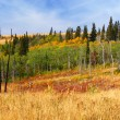 Montana Autumn Scenery — Stock Photo