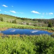 Bighorn National Forest Pond — 图库照片