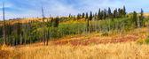 Montana Autumn Scenery — Stock Photo