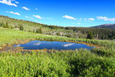 Bighorn National Forest Pond — Stock Photo