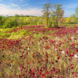 Stock Photo: Kettle Moraine State Forest
