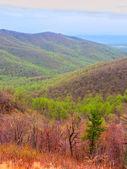 Shenandoah National Park of Virginia — Stock Photo