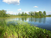 Little Bearskin Lake Wisconsin — Stock Photo