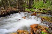 Bucking Mule Creek in Wyoming — Stock Photo