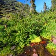 Glacier National Park Hillside Stream — Stock Photo