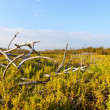 Coastal Prairie Landscape Everglades — Stock Photo