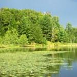 Mud Lake in Northwoods Wisconsin — Stock Photo #36957529