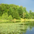 Mud Lake in Northwoods Wisconsin — Stock Photo