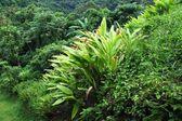 热带植被背景 — 图库照片