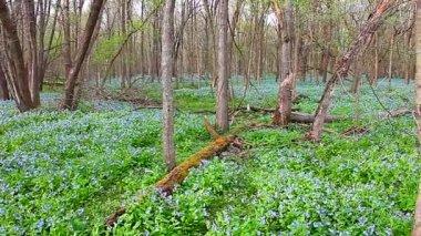 Oak Ridge Forest Preserve Illinois — Stock Video