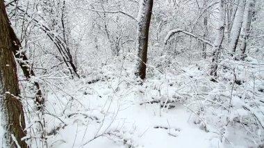 Winter Wonderland in northern Illinois — Stock Video