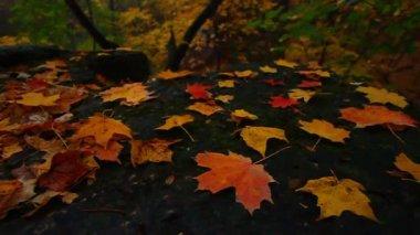 Beautiful Autumn Illinois Landscape — Stock Video
