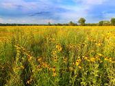 伊利诺伊州草原鲜花盛开 — 图库照片