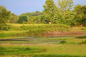 Wetland Restoration in Illinois — Stock Photo