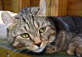 Kedi bir verandada — Stok fotoğraf