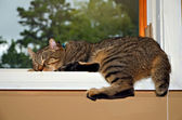 Siesta en una ventana — Foto de Stock