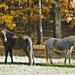 Stock Photo: Horses in Pasture in Autumn