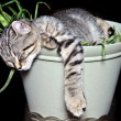 Kitten in Plant — Stock Photo