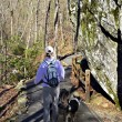 Hiking with Dogs — Stockfoto #21446009