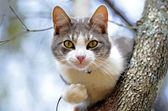 Kot siedzi na drzewie — Zdjęcie stockowe