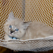 Cute Kitten in a Hammock — Stock Photo