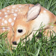 Decorative Fawn in the Grass — Stock Photo