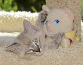 Kitten and Stuffed Animal — Stock Photo