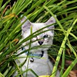 Kitten Hiding Outdoors — Stock Photo