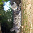 Kitten in a Tree — Stock Photo