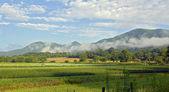 在上午的农场 — 图库照片