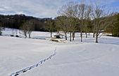 Winter Snow Landscape — Stock Photo
