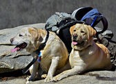 Tired Dogs on Hiking Trail — Stock Photo