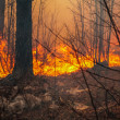 Forest fire — Stock Photo #18327853