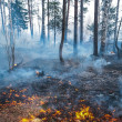 Forest fire — Stock Photo #18328015