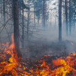 Forest fire — Stock Photo #18328027