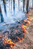Forest fire — Stock Photo
