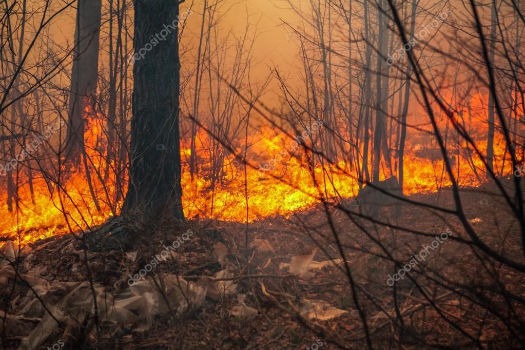 Фотообои Forest fire