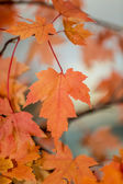 Autum Leafs — Stock Photo