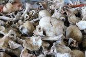 Human bones — Stock Photo