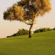 Single tree — Stock Photo #13683787