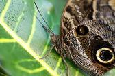 Butterfly — Fotografia Stock