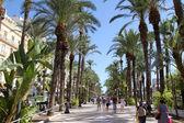 Callejón de palmeras tropicales en alicante, españa — Foto de Stock