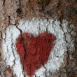 Heart on the tree - Stok fotoğraf