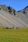 Granja de islandia — Foto de Stock