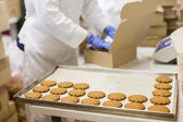Soubory cookie factory — Stock fotografie